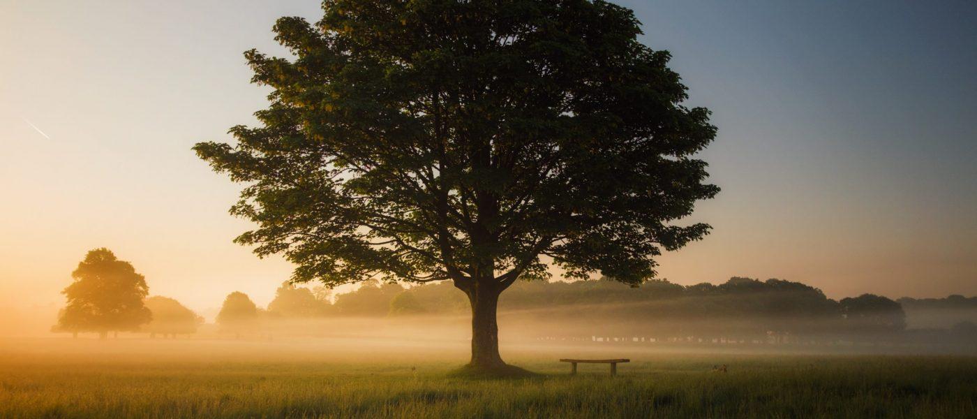 Foto albero (Psicoterapia)